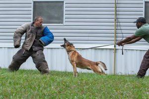 Dog-Training-1